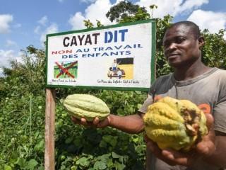 Một nông dân trồng ca cao của một hợp tác xã nông nghiệp ở Bờ Biển Ngà nói rằng đó là lao động trẻ em (Ảnh: AFP)